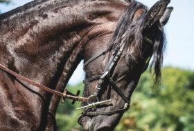 Dla miłośników koni i jeździectwa – zapraszamy już w sobotę!