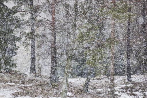 zdjęcie przedstawiające opady śniegu