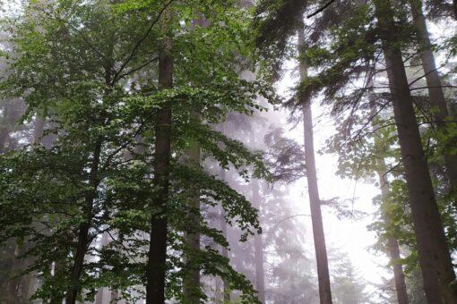 Informacja o wyłożeniu do publicznego wglądu projektów uproszczonych planów urządzenia lasu w gminie Mucharz