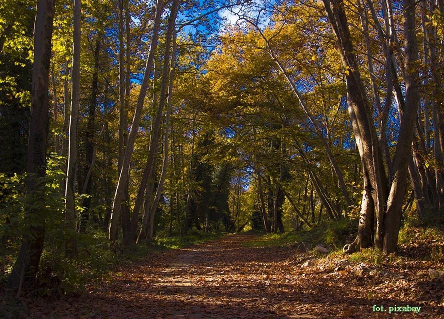 w urzędzie gminy Stryszów wyłozonodo publicznego wglądu projekty uproszczonych planów urządzenia lasu